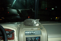 napping on the dashboard